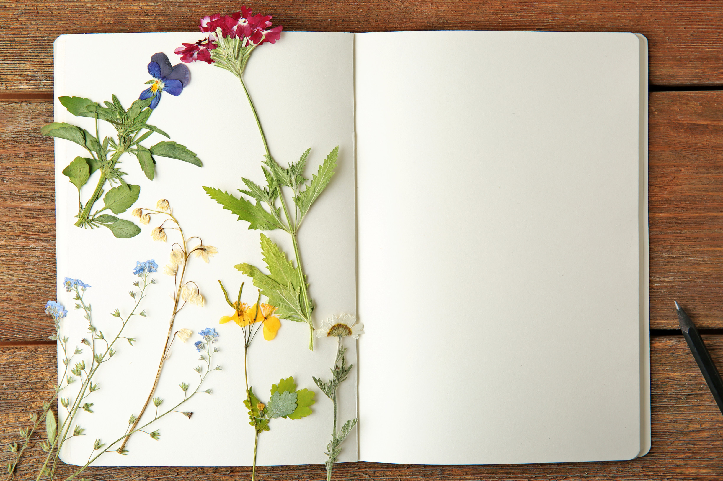 plants flowers journal diary